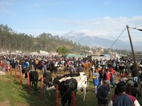 Animal Market in Otavalo