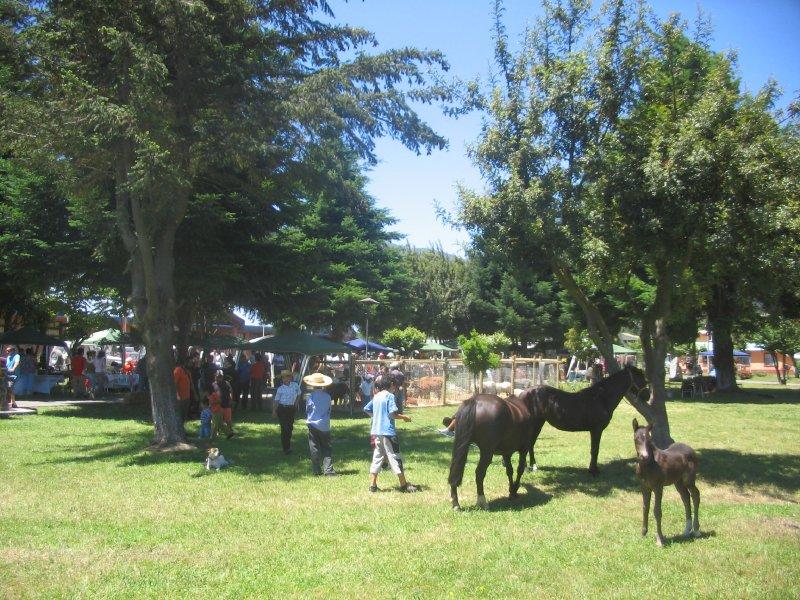 20100123 Malipeuco - Plaza 3