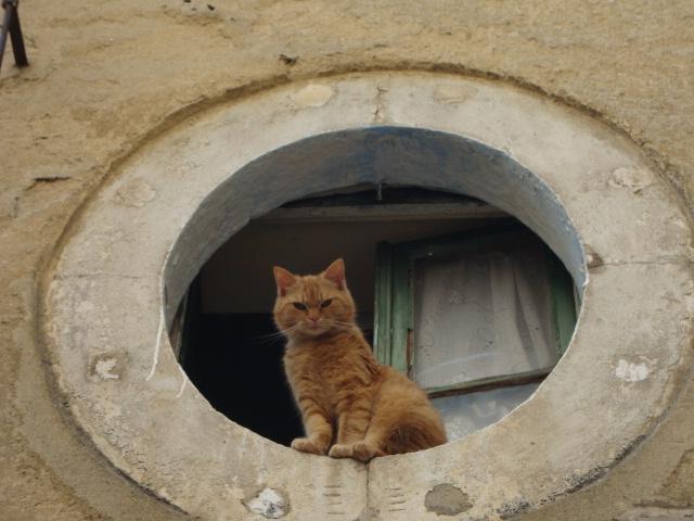 window in Sibenik