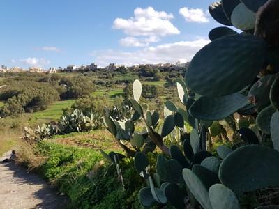 G - walking trail Gozo