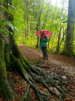 Bavarian forest