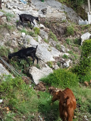 Valle delle Ferriere walk2
