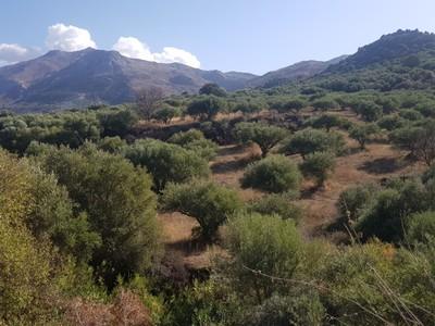 C -Crete interior