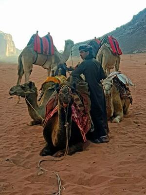 J-Bedouin and camels Wadi Rum