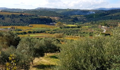 C- Vineyards and olive groves