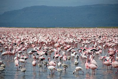 Meeting_the_flamingos.jpg