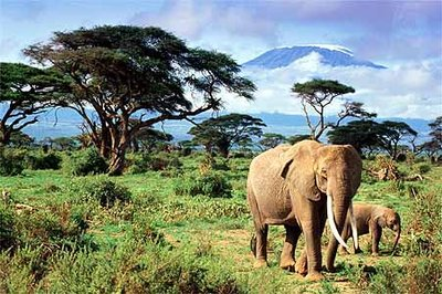 Spying_Mt_Kilomanjaro.jpg