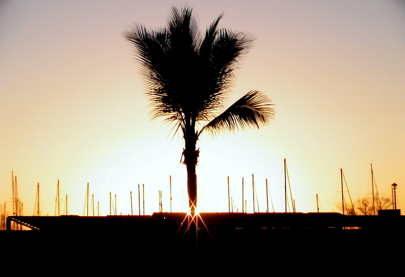 Shimmering Palm