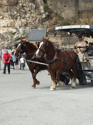 Horse rides at Mont St Micheal