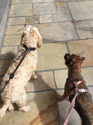 Rosie and Poppy waiting outside the Boulange in Dinard