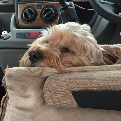 Oh I love this life... I am so comfy.. .