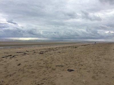 Utah Beach. Very windy... and lots of shells..