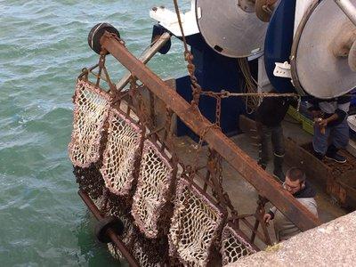 Fishing fleet at St Vaast La Hougue