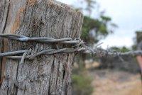 Rabbit Proof Fence