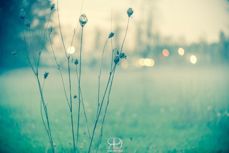 L'inverno colpisce soprattutto piante e fiori. Colori freddi e n