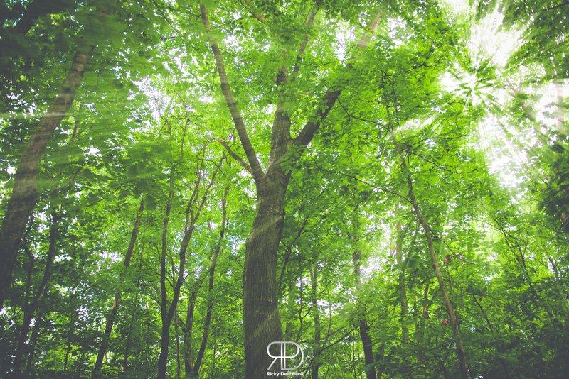 """""""Amo gli alberi perché sembrano più rassegnati di ogni altro e"""