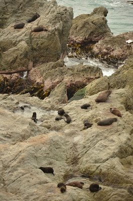 Seal colony on our way from Picton to Queenstown