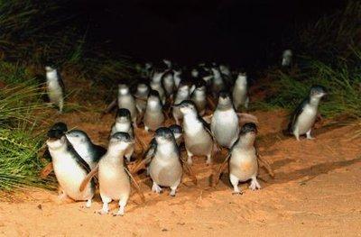 large_penguin7.jpg