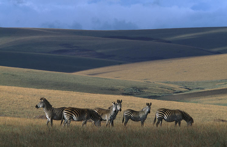 LMw.22 - Nyika Crawshay Zebra & Plateau [LR NHPA]