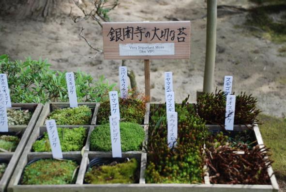 Kyoto- temple -VIP moss !!!