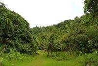 jungle cook islands banana tree
