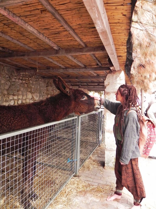 The Lovely Donkey @ Sineu Market
