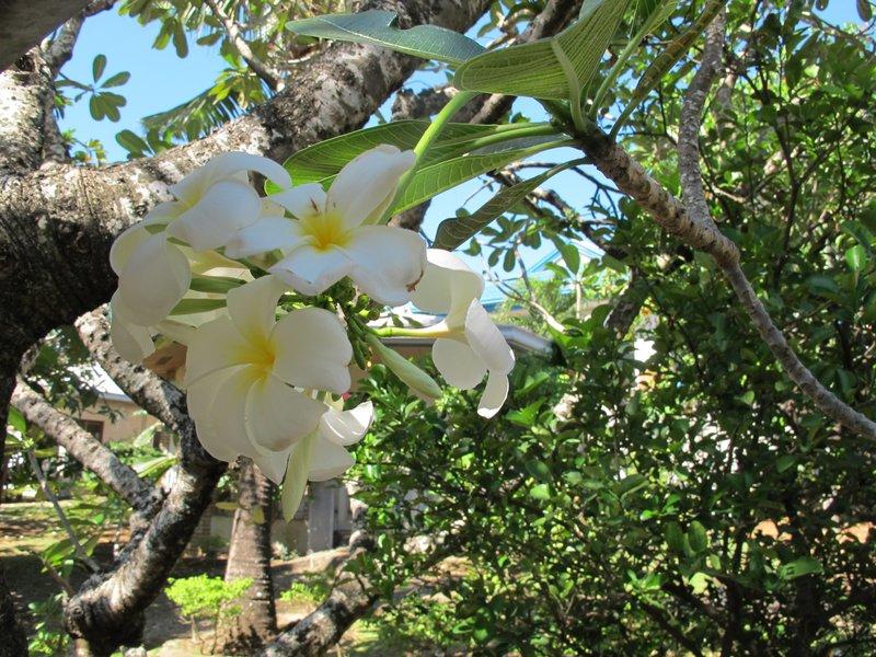 Flora at Lapu-Lapu Philippines