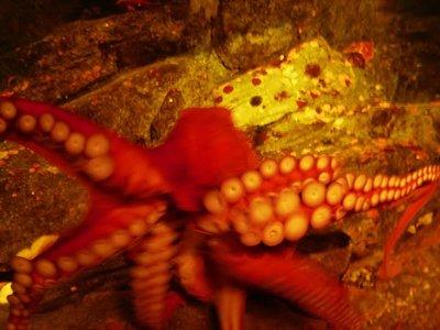 15-Seattle_Aquarium.jpg