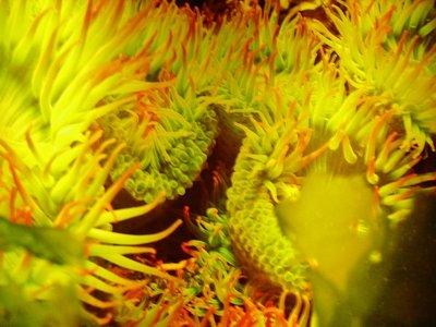 2-Seattle_Aquarium.jpg