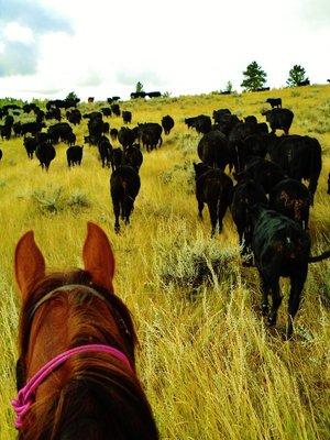 24-Cattle_Drive.jpg