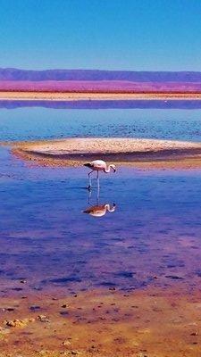37-Atacama_Salt_Flat.jpg