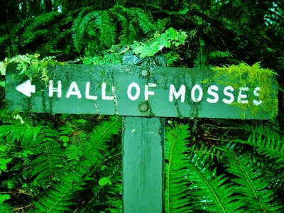 68-Hall_of_Mosses.jpg