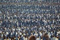 Penguins Everywhere!