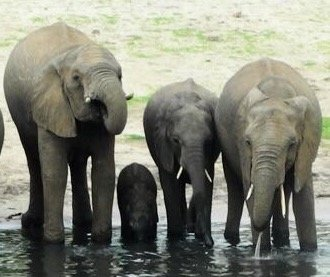 Etosha_-_Baby_Elephant.jpg