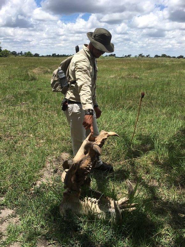large_90_Botswana_-..Hippo_skull.jpg