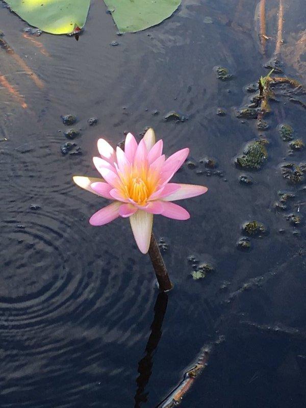 large_90_Botswana_-..lta_-_Lotus.jpg