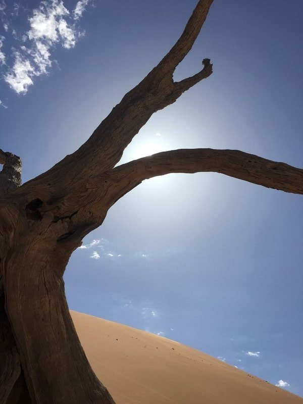 large_90_Deadvlei_-..scuring_sun.jpg