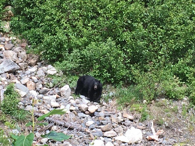 large_Bear_on_th.._Rupert_-_2.jpg