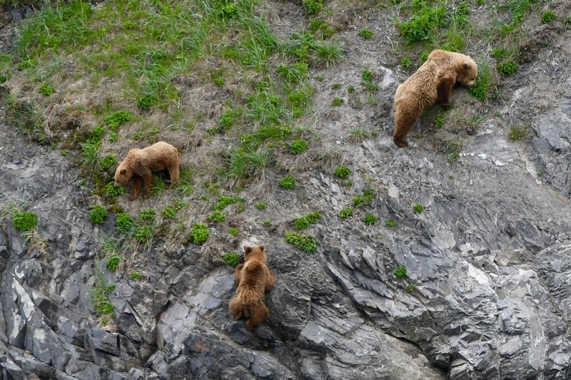 large_Bears4.jpg