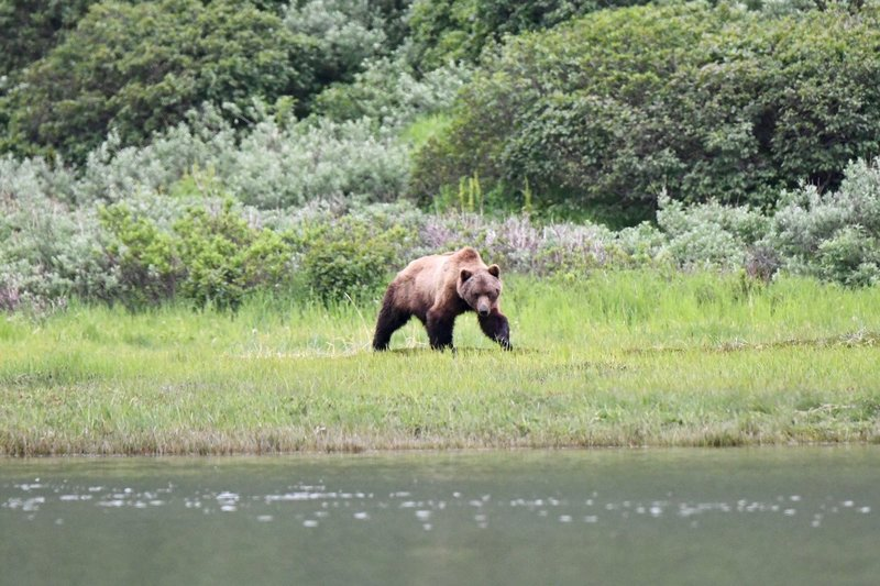 large_Bears5.jpg