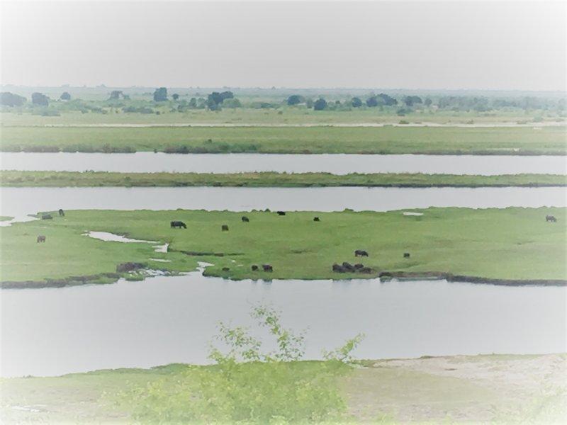 large_Botswana_-..f_water__2_.jpg