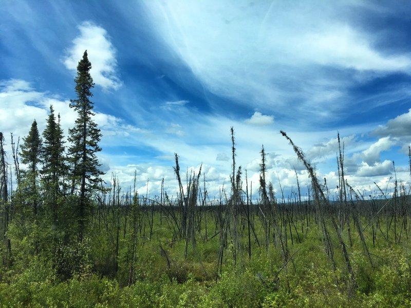 large_Dawson_City_to_Fairbanks.jpg
