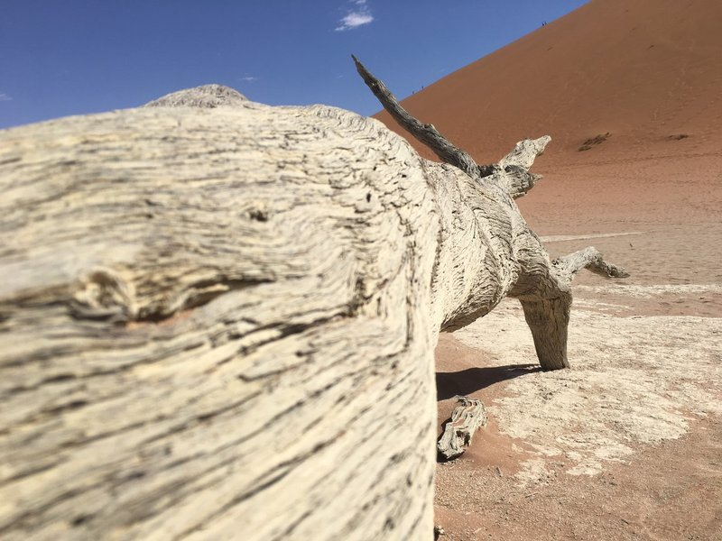 large_Deadvlei_-_tree_trunk.jpg