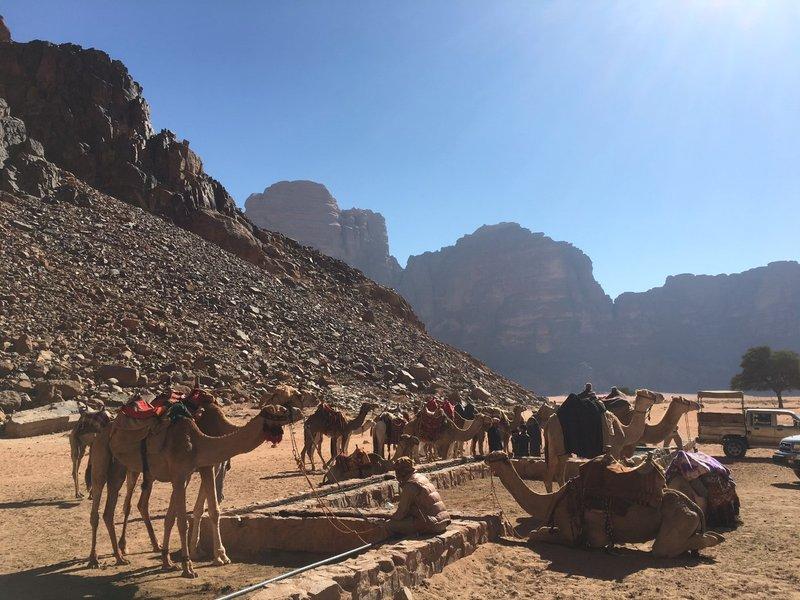 large_Jordan_-_W..um_-_Camels.jpg