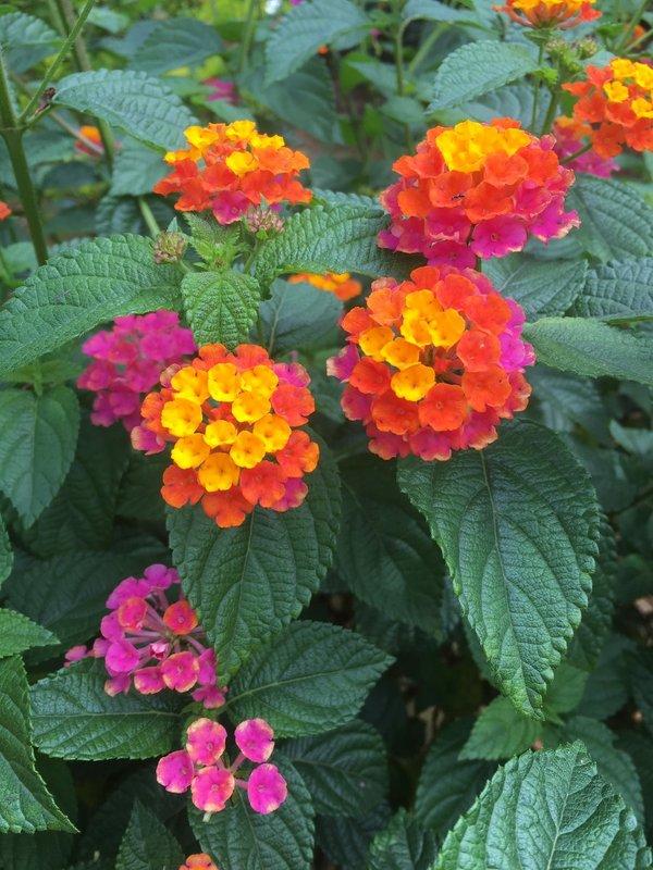 large_NM_Flowers.jpg
