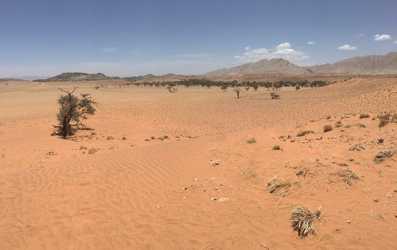 large_Namib_Nauk..ushman_walk.jpg