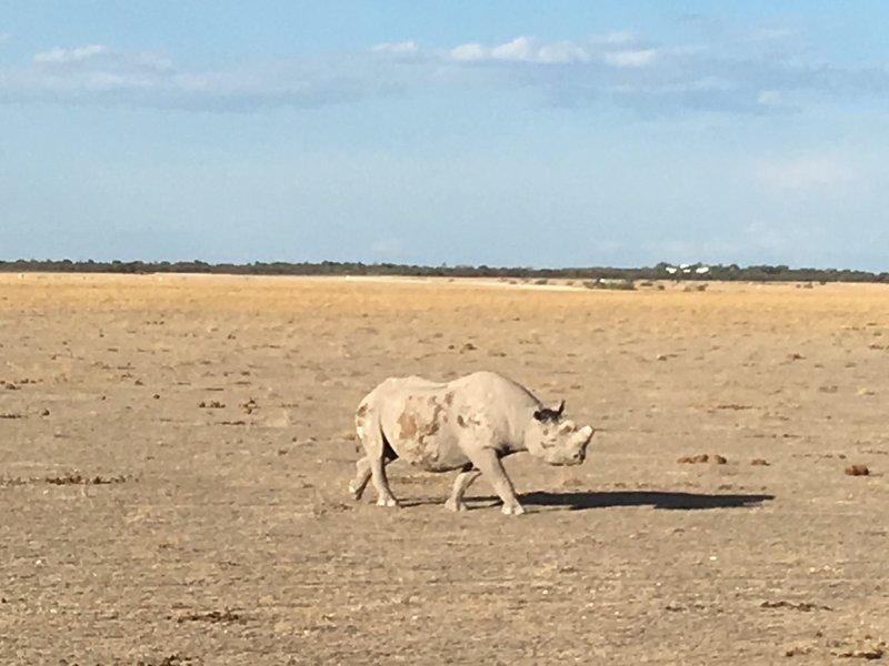 large_Namibia_-_..a_-_Rhino_2.jpg