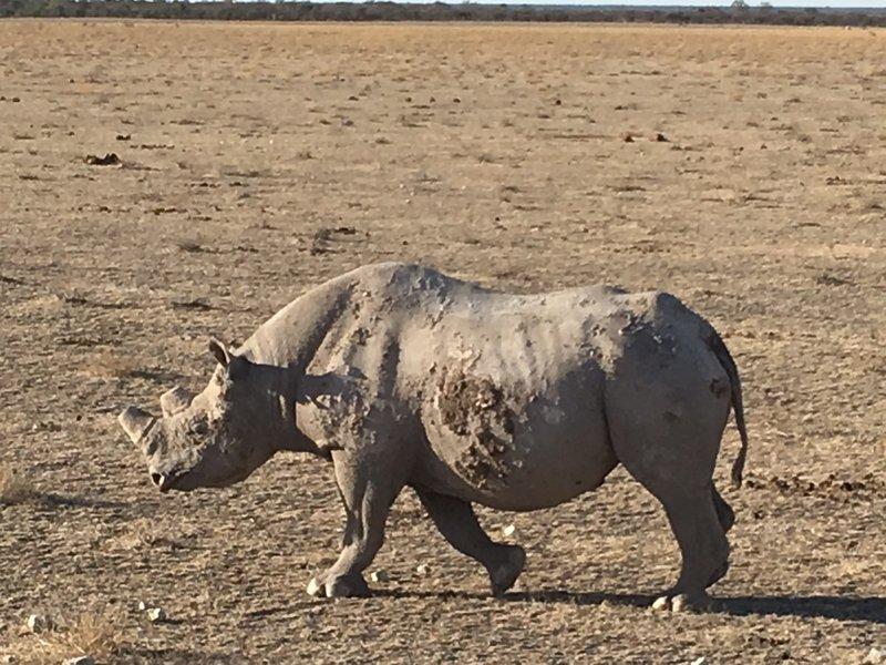 large_Namibia_-_..a_-_Rhino_3.jpg