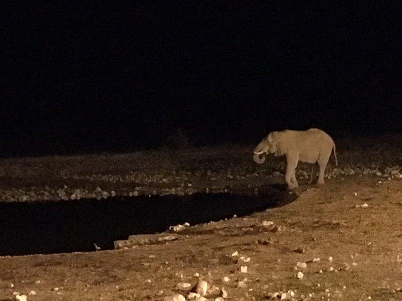 large_Namibia_-_..lephant_-_2.jpg