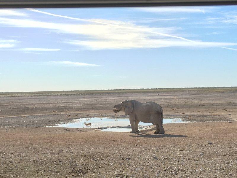 large_Namibia_-_..t_waterhole.jpg